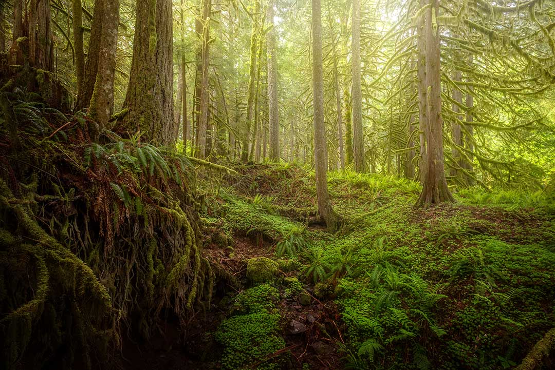 Lost In The Mossy Forest - Gary Randall Photography